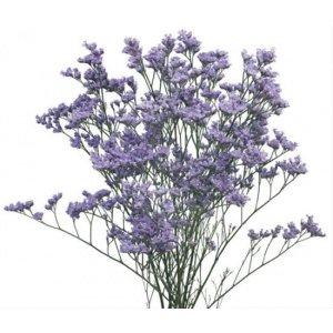 CNLN003 Limonium-Purple (Misty Blue) 1 Bundle [CN]