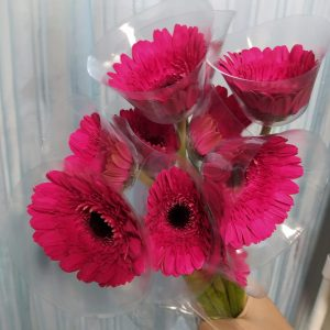MAG001 Gerbera  Assorted Colors 10 STKS [MA]