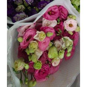Eustoma – Pink 粉色洋桔梗 (1 bundle) [CN]