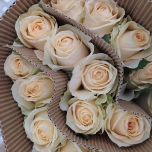 Rose No Net – Peach Avalanche (Champagne) 蜜桃雪山玫 (20 stalks) [CN]