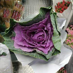 CNBR001 Brassica Purple 1 STK  [CN]