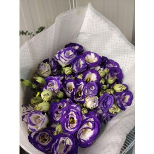 Eustoma – White/Purple 紫白洋桔梗 (1 bundle) [CN]