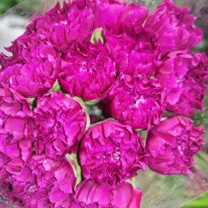 Carnation – Purple 紫水晶大丁 (20 stalks) [CN]