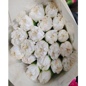 Carnation – White 白色大丁 (20 stalks) [CN]