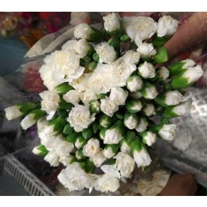 Carnation Spray – White 多头康乃馨 (1 bundle) [CN]