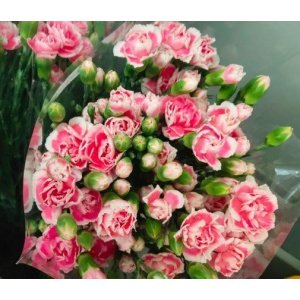 Carnation Spray – Pink/White 多头康乃馨 (1 bundle) [CN]