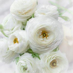 Ranunculus 小牡丹 (1 bundle) [CN]
