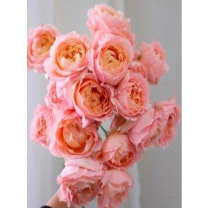 Spray Rose – Juliet Tower 朱丽叶塔多头玫 (1 bundle) [CN]