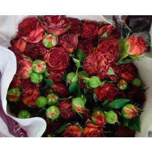 Spray Rose – Chocolate Bubble 巧克力泡泡多头玫 (1 bundle) [CN]