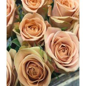 Rose No Net – Cappuccino 卡布奇诺玫 (20 stalks) [CN]
