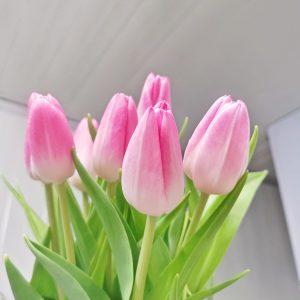 Tulipa Rosario (10 stalks) [Holland]