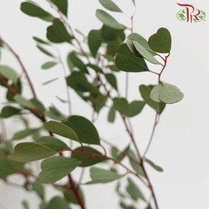 Eucalyptus – Love 心形尤加利 (1 bundle) [CN]