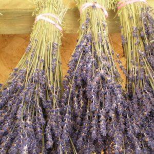 Lavendula Dried (1 bunch)