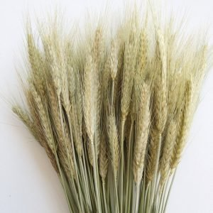 Triticale Dried (1 bundle)